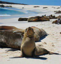 photo of seal in the Galapagos Islands