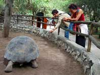 Photo of a Tortoise at Quito Zoo